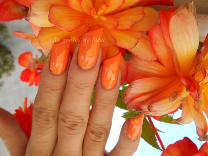 HEMA 815 orange 2